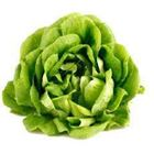 Picture of BUTTER LETTUCE