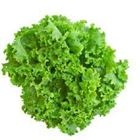 Picture of GREEN CORAL LETTUCE
