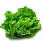 Picture of GREEN OAK LETTUCE