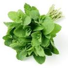 Picture of ROUND MINT HERBS