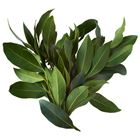 Picture of BAY LEAF 20G PACK